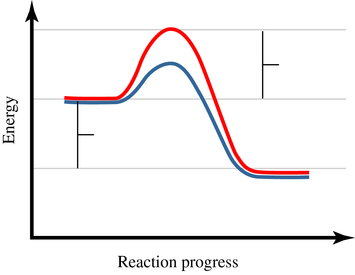 Energy is plotted on the y axis versus the reaction progress on the x axis. There are two curves. Both curves start at the same energy, rise to a maximum energy and decrease to the same final energy. The final energy is lower than the initial energy. The maximum energy of the red (top) curve is greater than the maximum energy of the blue (botton) curve.
